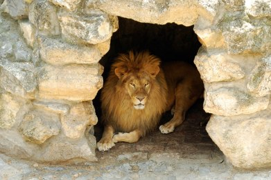 daniel-6-lions-den