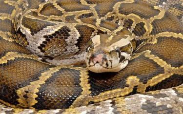 python_2444555b