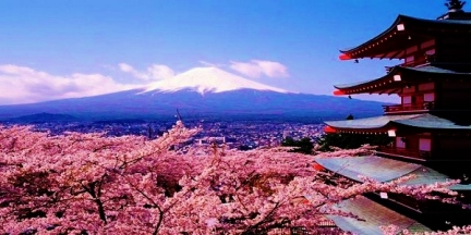 cherry-blossoms-japan-international-tefl-academy