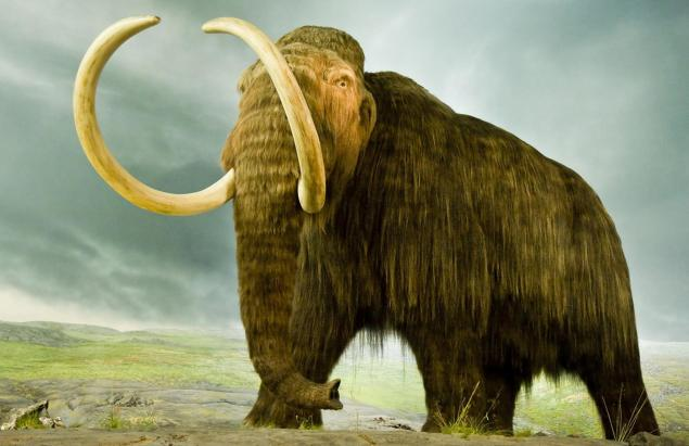 woolly-mammoth-standing-ngsversion-1460131402232-adapt-1900-1